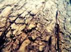 carbon y lena a domicilio en valencia